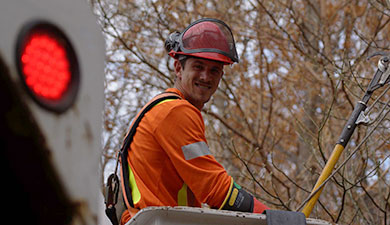 Contact Neuheimer Tree Care