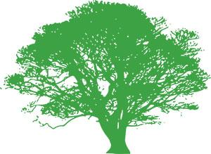 Windsor Ontario Certified Arborist