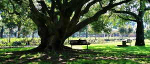 oak-tree-Inspection-Consulting