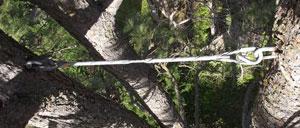 cabling-bracing