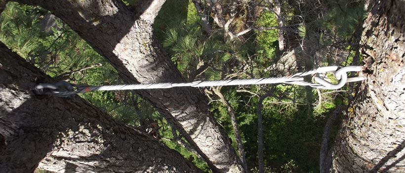 Tree Cabling and Bracing