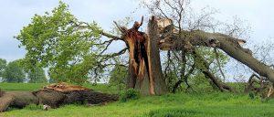 hazardous-tree-Inspection-Consulting