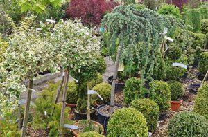 nursery-trees