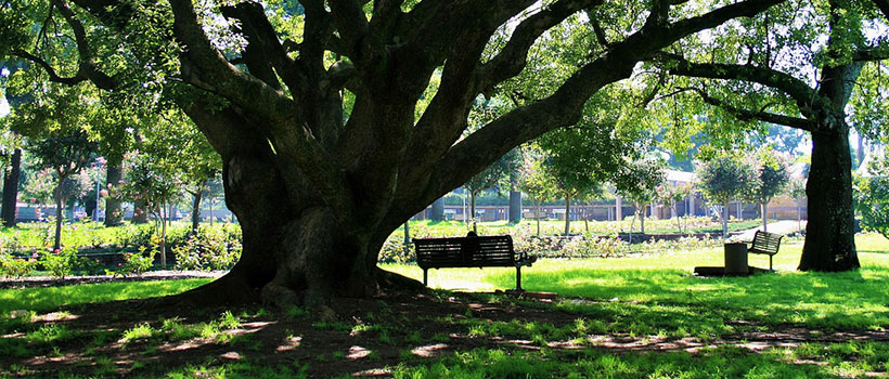 Preservation Reports - Oak Tree
