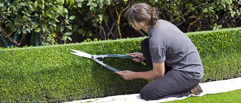 shrub-pruning