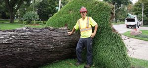 tree service Windsor, Ontario